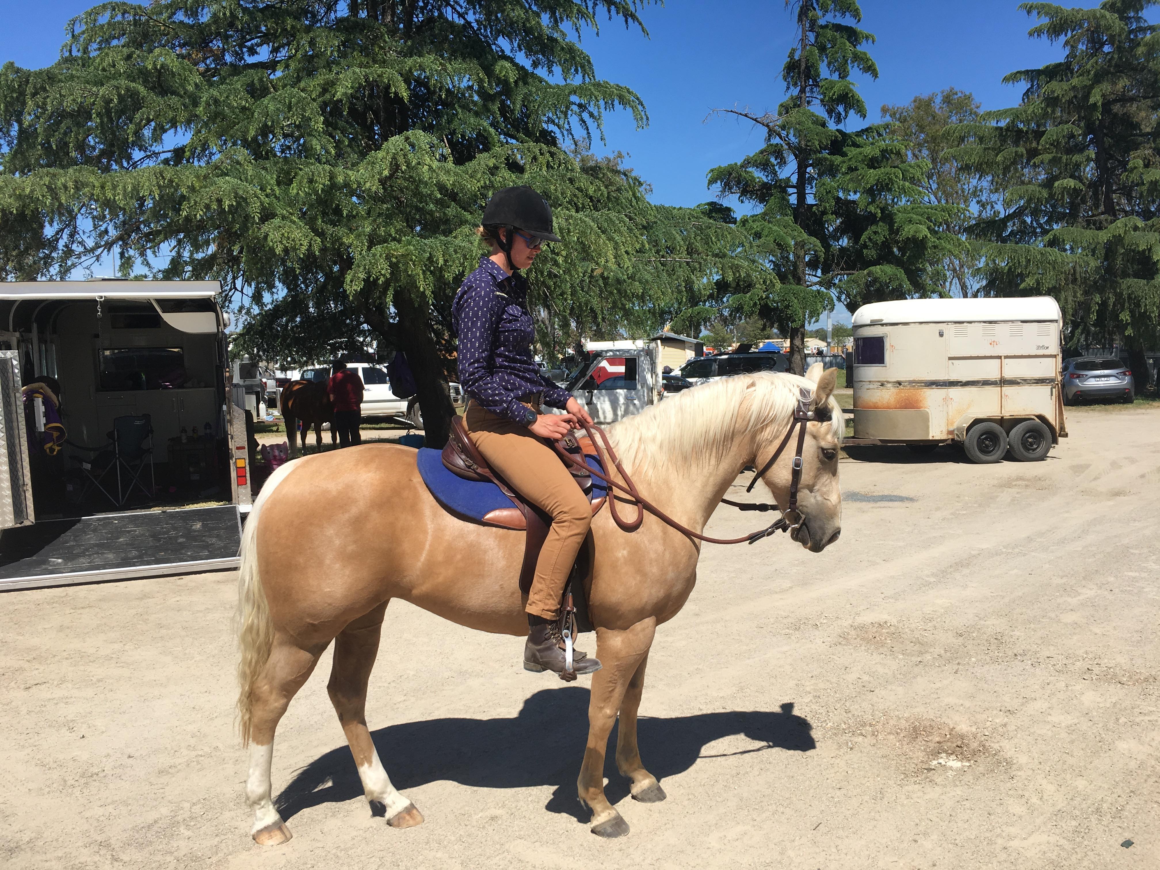 Stunning Reg QH mare