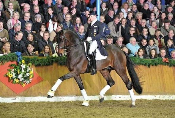 IHB offers at stud - FURST ROMANCIER