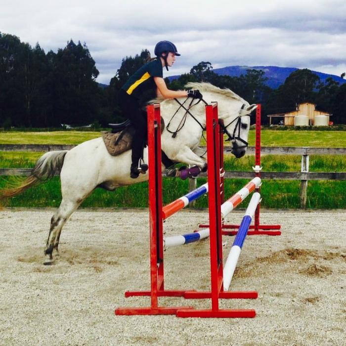 quality and fun pony for pony club and showjumping