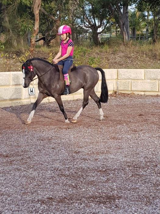 Leading Rein/First Ridden/Showing/Pony Club