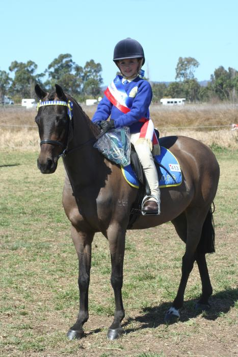 Harrington Park Page Boy - Allround Pony