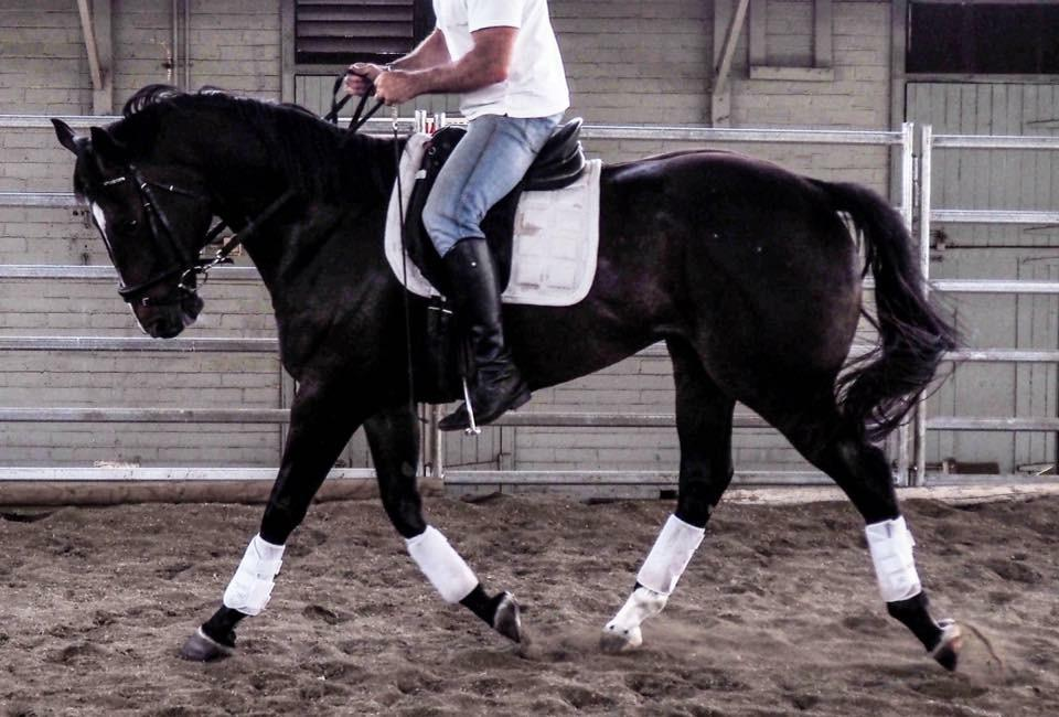 Quality project horse