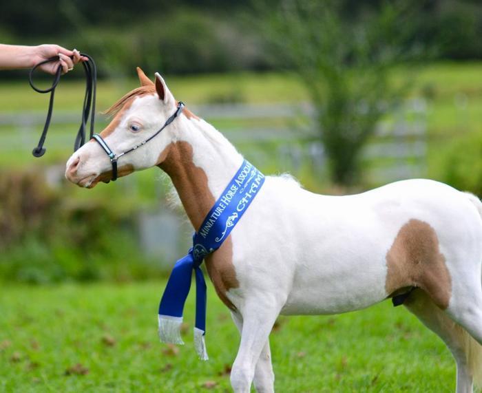 Flashy Champion winning colt