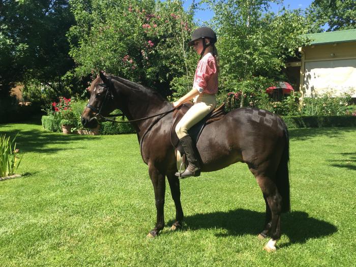 All-round pony