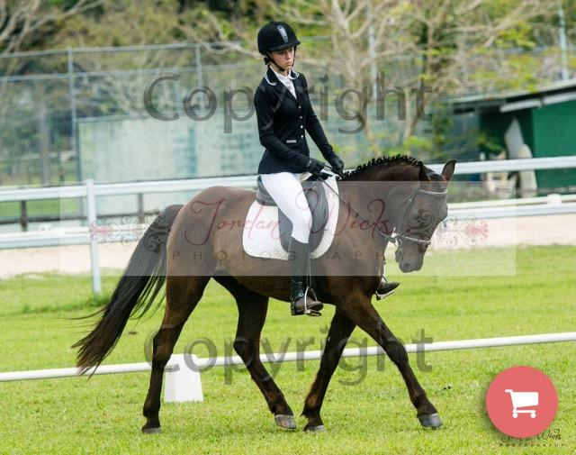 Faultless Competitive Pony