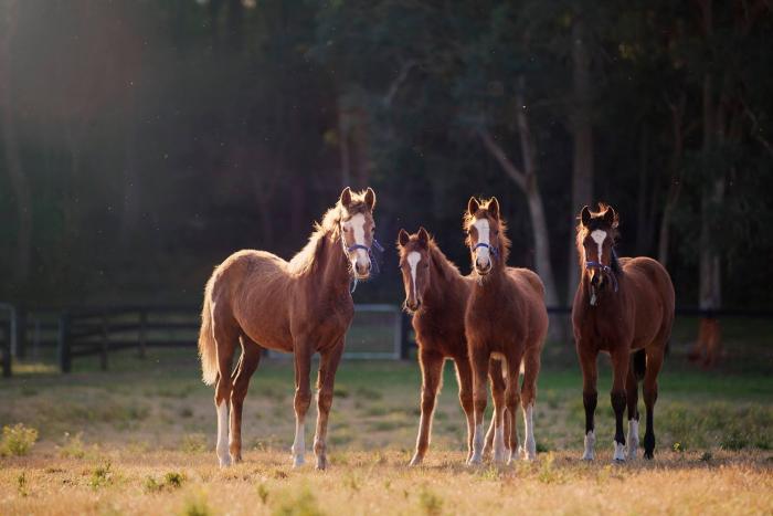 Yandoo Equestrian and Caliera Performance Horses