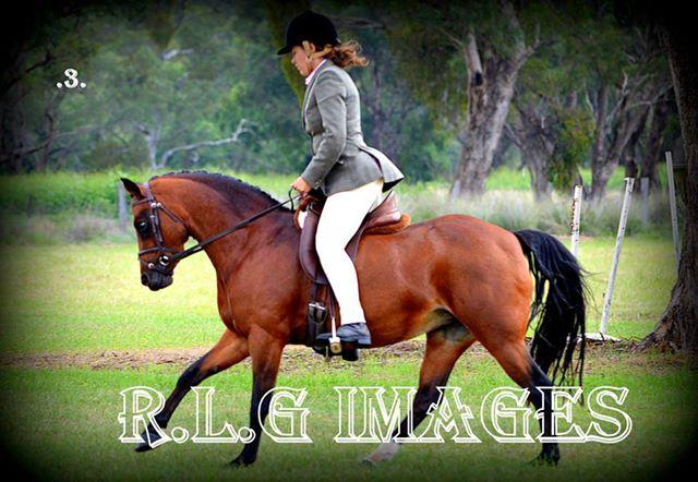 Stunning 8 Year Old Proven Show Mare