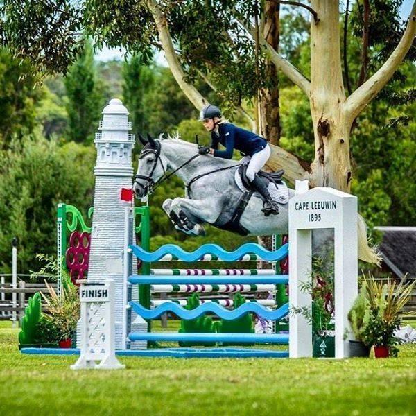 Competitive jumper, wonderful temperament