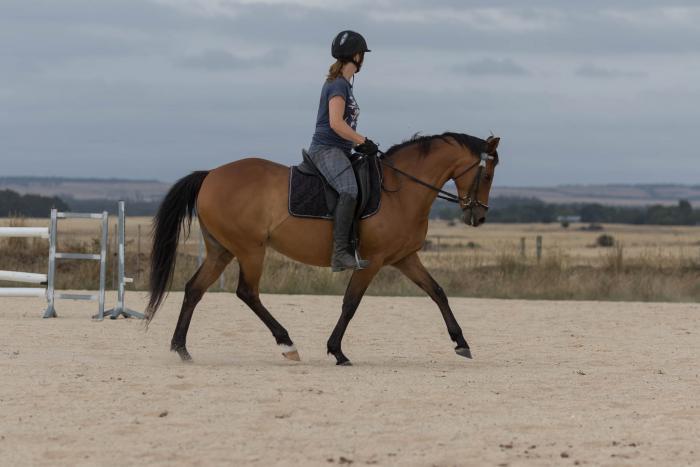 Sarah the horse