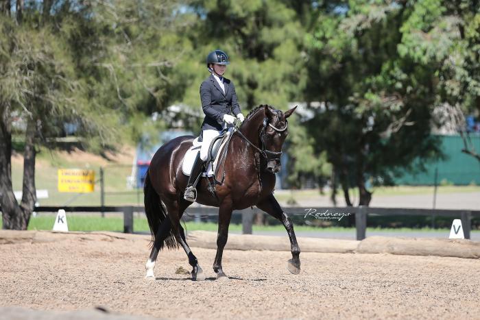 Mindarah Park Remembrance - QUALITY DRESSAGE HORSE