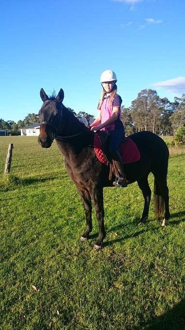Busta - Australian Stock Horse