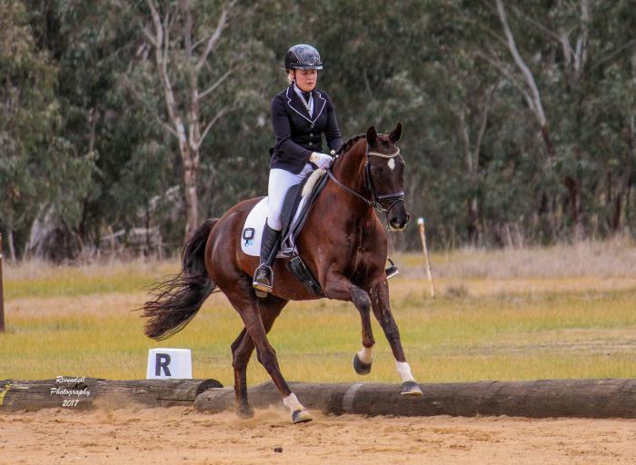 7yo dressage mare - FEI prospect