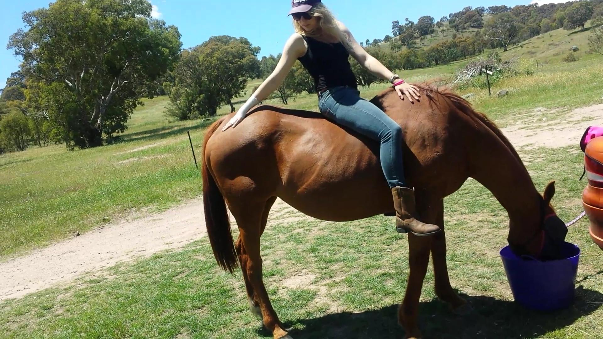 Sweet mare with super comfy paces!