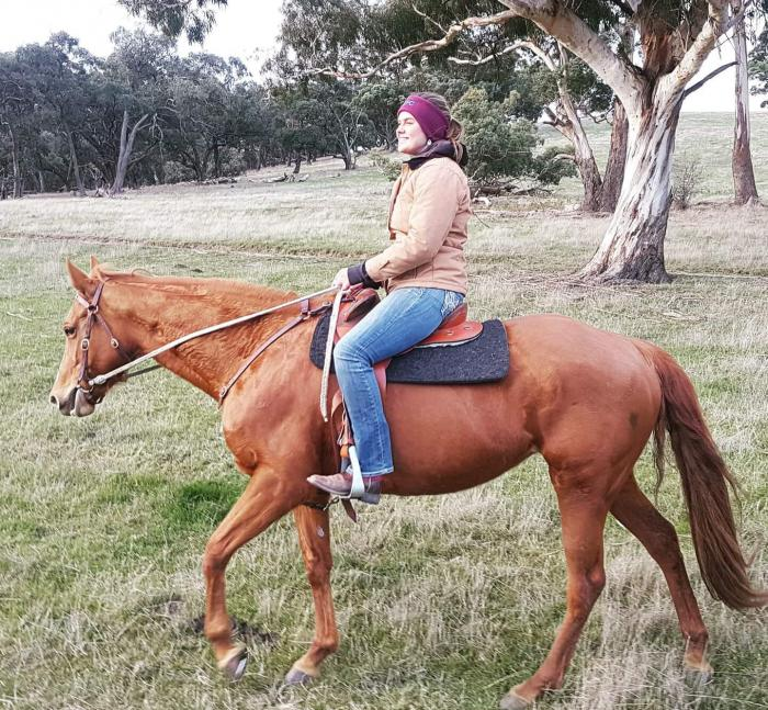 Beautiful Quarter Horse Broodmare or Light Riding*