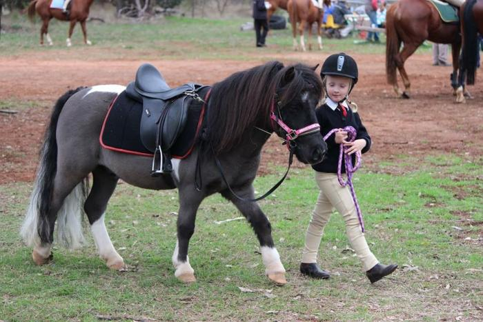 Beautiful Kids Pony