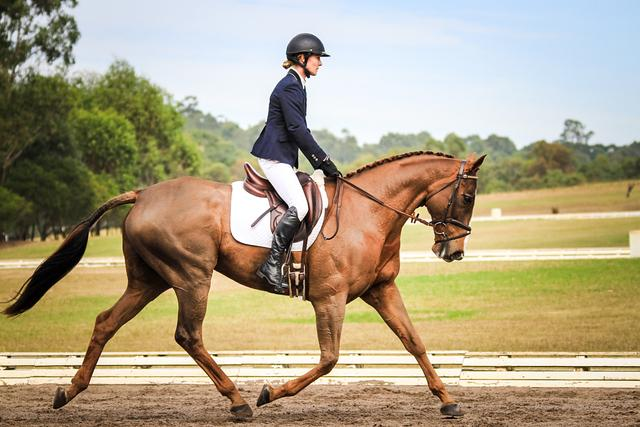 Quality Dressage Gelding at a reasonable price
