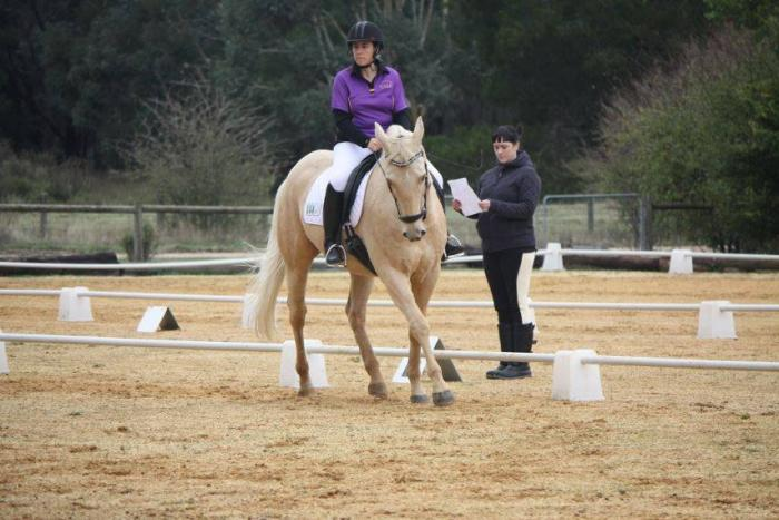 Classical dressage all rounder