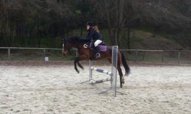 Nice bascule/shape over jumps/fences