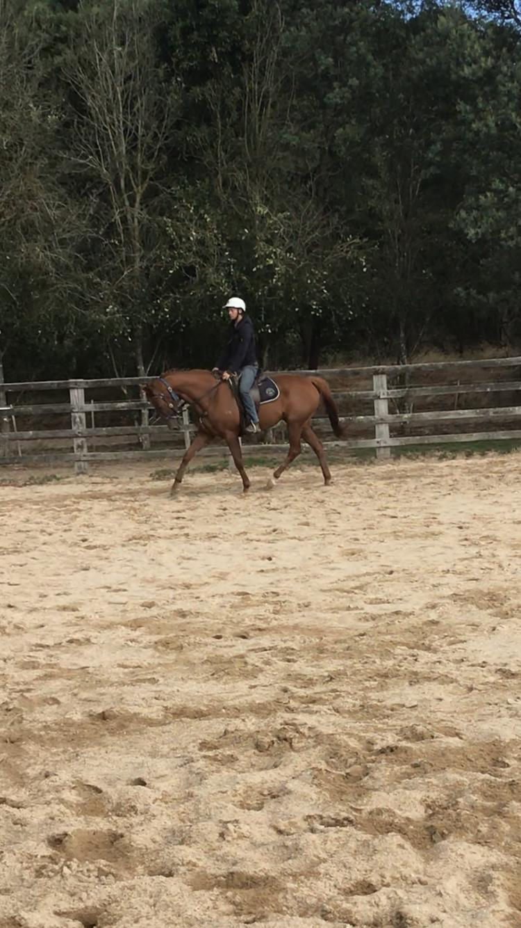 Ideal trail riding horse