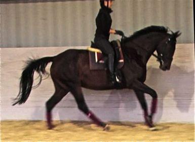 at 3 weeks under saddle