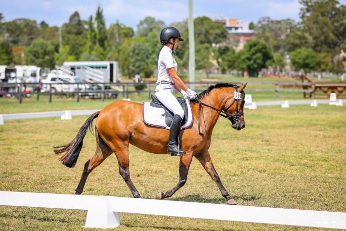 Performance Pony