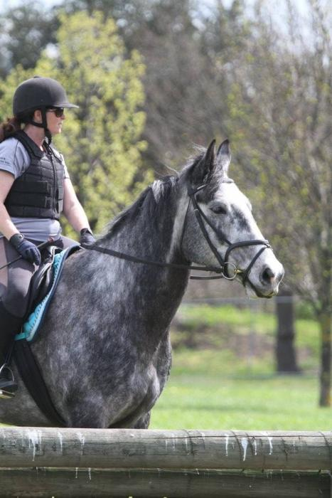 PRICE REDUCED MUST SELL Beautiful Percheron/TB Gelding