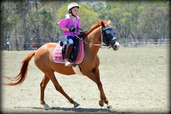 Fantastic School Master Pony