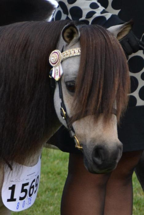 JOEMOOR THUNDERSTRIKE ~ The Ultimate Show Pony!