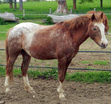 Perfect Broodmare/Companion or Friend