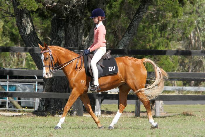 Competitive Schoolmaster Pony