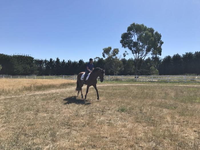 Unraced TB- Perfect Allrounder