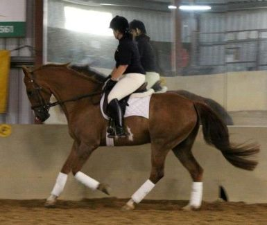 Flatwork Canter
