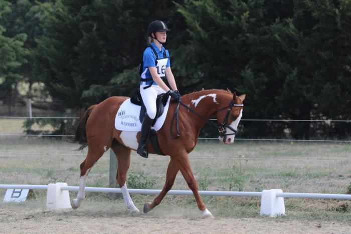 All rounder QH x Paint