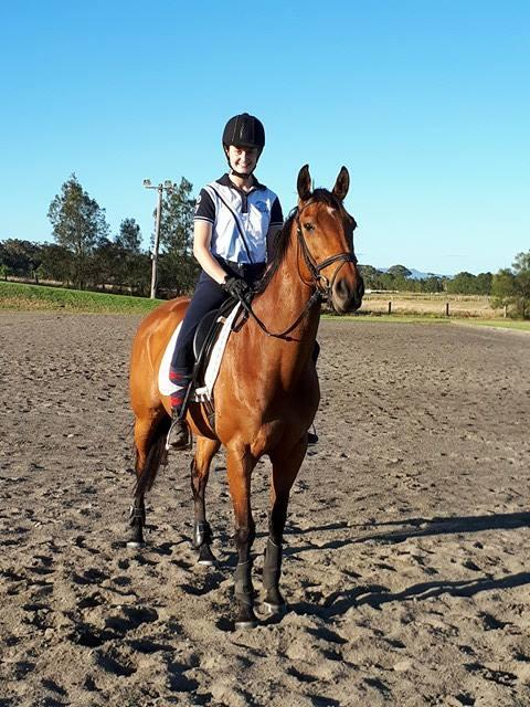 """Shrewji"" Talented Eventing  Mare"