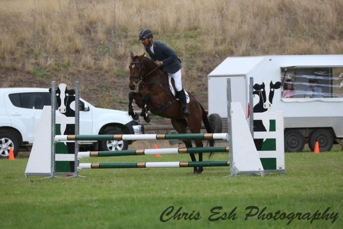 Genuine young eventing horse with a big future!