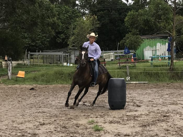 Registered Stockhorse Gelding