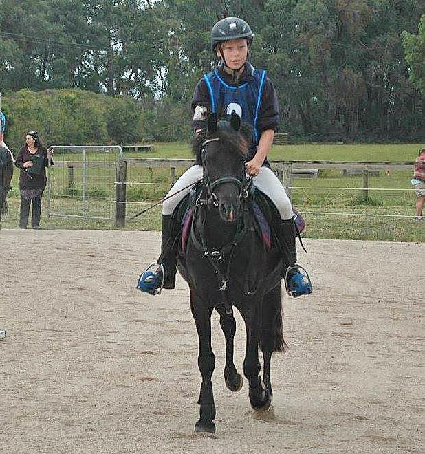 Performance Pony Gelding
