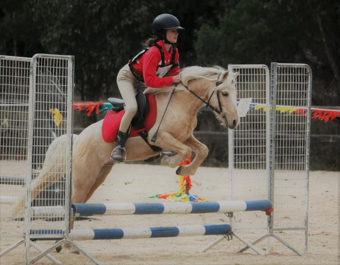 Ripper of a pony, 12h, 9yo palomino gelding