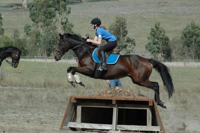 ASH mare Beswick Destiny