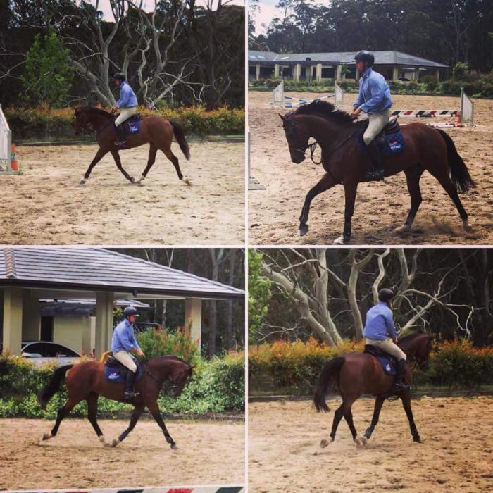 Quintador Jump/Event Filly 4yrs