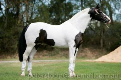 her sire Whats Colour