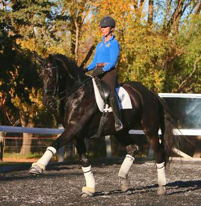 Extravagant Moving 10yo FEI Warmblood Gelding