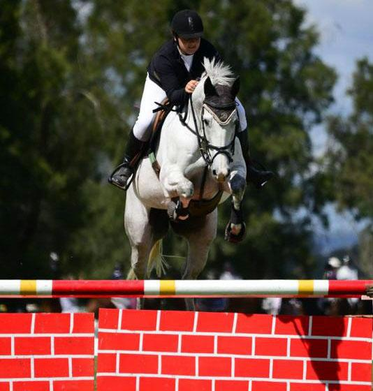Stylish Showjumper and all rounder - Camden Style