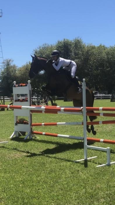Half sister to International Show jumper 7yo Mare