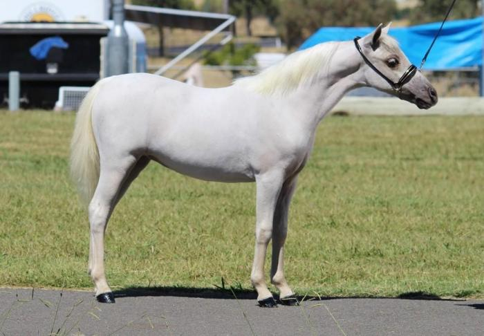 OUTSTANDING YEARLING FILLY