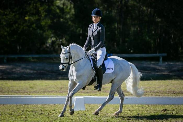 Exceptional Royal Winning Performance  Pony