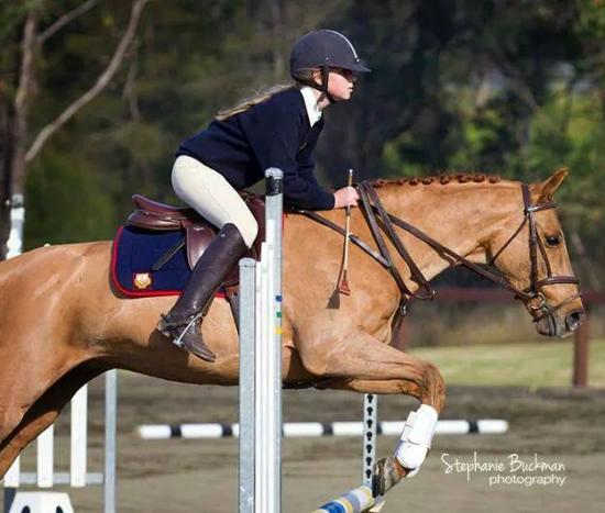 Mother's Dream Showjumper and Eventer