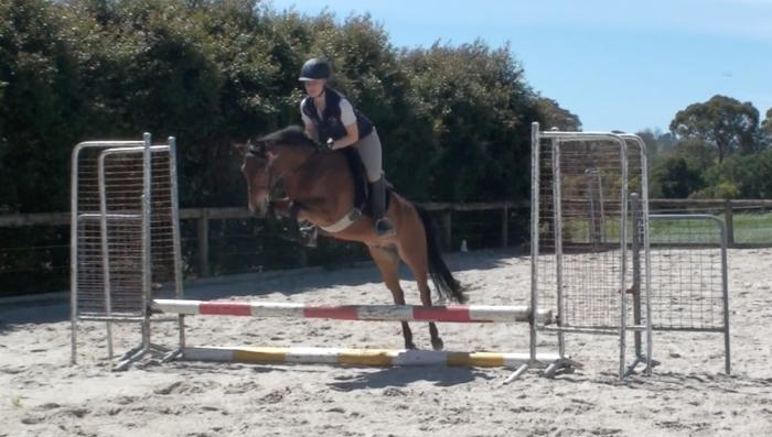 Chippenham Hilltop- Great all round pony!