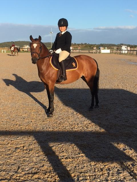 13hh All Rounder New Forest x Aus RP
