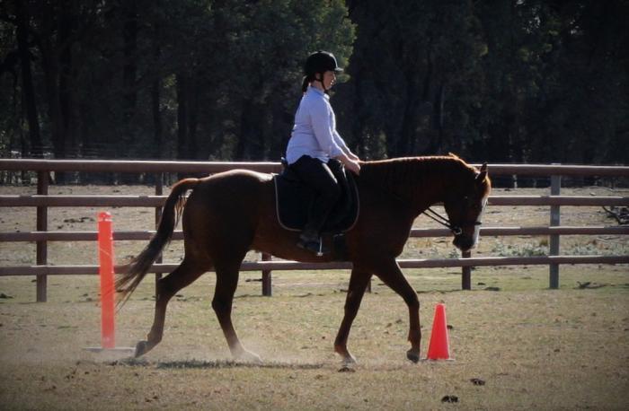 Versatile horse